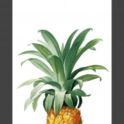 Pineapple (jpeg file) 8x10 inch
